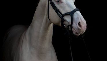 Design Your Own Bespoke Montar Ergonomic Bridle