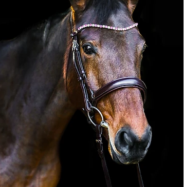 Bridles & Headcollars