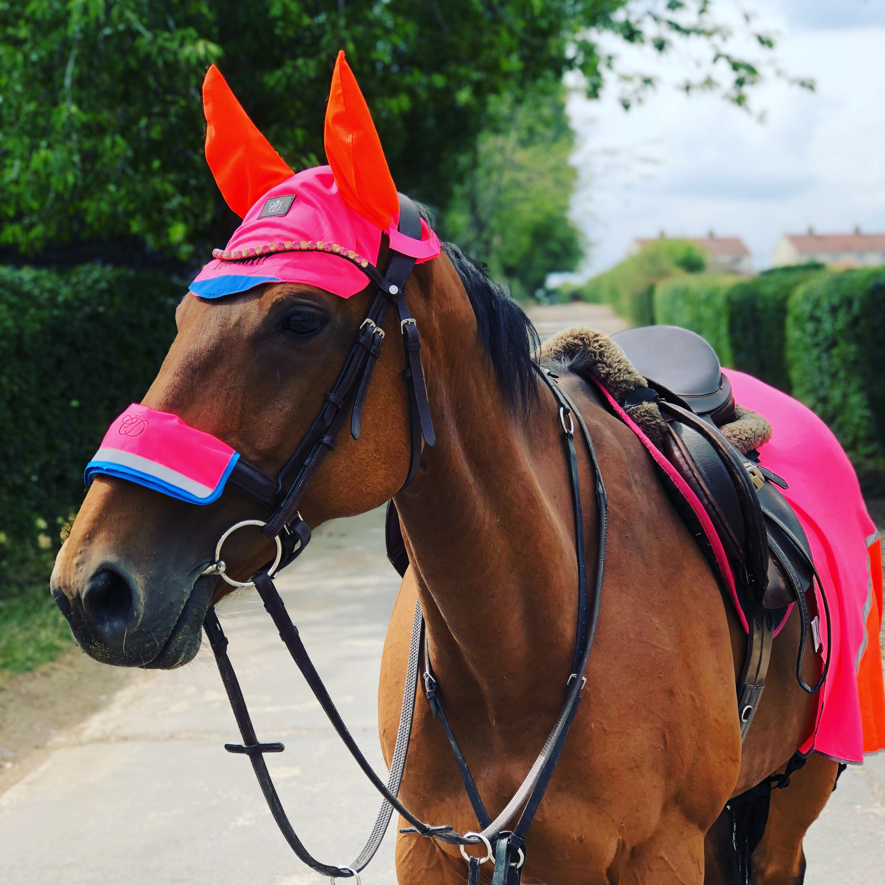 How To Stay Safe & Stay Seen With Equisafety HiViz