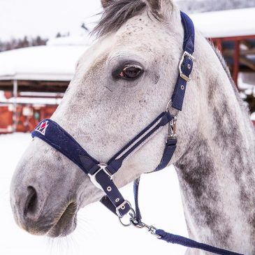 mountain horse navy nylon headcollar