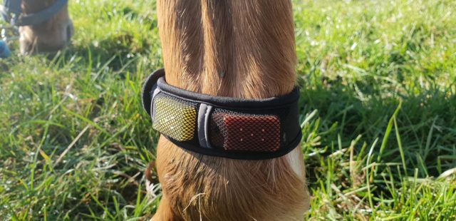 How To Use Fly-Off Insect Repellent Bands For Your Horse