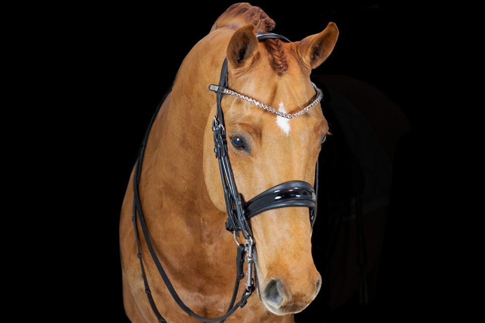 ps of sweden big bucks browband